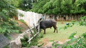 horn : The big buffalo is eating grass in the garden.