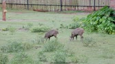 kuş sürüsü : Animals is eating grass in the garden.