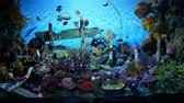 キャンパス : Beautiful fish in the aquarium on decoration  of aquatic plants background. A colorful  fish in fish tank. 動画素材