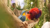 travel cage : Macore Bird Hold on tree branch. Beautiful macore Parrot bird standing on a wooden.