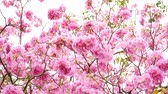 agradável : Pink flower and tree branch blur nature background.