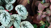 vertical growth : Ornamental plants for garden decoration.