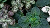 fadas : Ornamental plants for garden decoration.