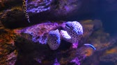 meduza : Sea eels in fish tank, Aquarium decoration. Moray Eel in fish tank.