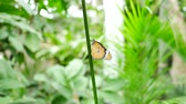 бабочки : Butterfly on tree leaf green nature  background.