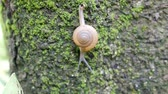 caracol : Snails walk on trees that are full of moss.