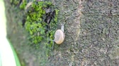 sümüksü : Snails walk on trees that are full of moss.