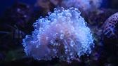動物学 : Beautiful sea flower in underwater world with corals and fish.