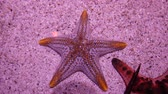Star fish in pond