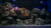 Sea eels in fish tank, Aquarium decoration. Moray Eel in fish tank.