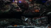 egyetemi : Beautiful fish in the aquarium on decoration  of aquatic plants background.