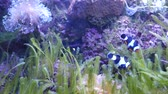 Beautiful fish in the aquarium on decoration  of aquatic plants background.