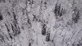 Aerial flight over the winter forest. Drone flies over the taiga.