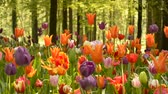Multiple Colored Tulips outdoor in a forest