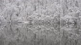 wintertime : Forest is reflected in the surface of the lake