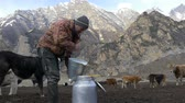 milk pouring : Farmer pours fresh milk into the can