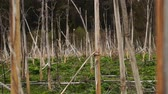 dreadful : Panorama of the field of dried hogweed