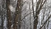 Snowfall in winter Stock Footage