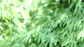 Nature Blurred Green Background, Beautiful out of focus Waves Moved tree