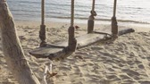 Sea wave on the beach and Wooden swing hang under a tree