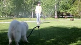 шланг : A white dog plays with a stream of water from a hose.