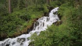 미각 : Mountain stream with clear water. A small river with pure water.