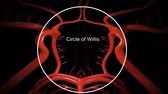 cholesterol plaque : Animation of circle of willis, muscle layer