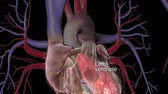 bundle of : The Cardiovascular System
