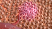 mikroskop : Cancer cells under the microscope Wideo