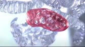 mikrobiyoloji : Biology scene with mitochondria inside the cell. Stok Video