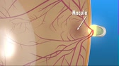 jaskra : 3D medical anatomy of an animated eye on blue background. Age Yellow spot disease.