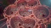 breath : Alveoli in lungs - blood saturating by oxygen