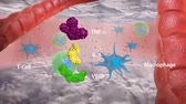 atommag : macrophage and virus, virus, macrophage and virus