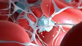 coagulation : Animation of a blood clot or thrombus. Stock Footage