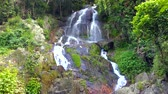 Waterfall in the Jungle Stok Video