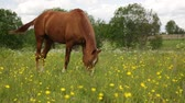 parque eólico : Horse eats grass on the summer pasture