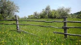 фехтование : Slider shot of blooming apple garden, blue sky and wooden fence Стоковые видеозаписи