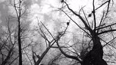 dark : Mystic autumn scene, silhouette of crows flying around nests Stock Footage