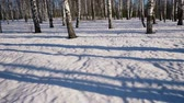 seasonal : Slider shoot of  moving shadows from trunks of trees in winter forest, time lapse clip Stock Footage