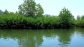 canoe : The thickets of mangrove forests on Kangy river, popular destination among ecotourism lovers next to Chaung Tha tourist village, Myanmar. Stock Footage
