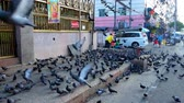 indočína : YANGON, MYANMAR - FEBRUARY 15, 2018: The flock of pigeons occupied the street at the Hindu Temple in Little India neighborhood and eats the grains, brought by local people, on February 15 in Yangon.
