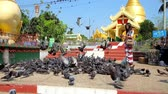 dagon : YANGON, MYANMAR - FEBRUARY 17, 2018:  Buddhist devotees feed the flock of pigeons at the Maha Wizaya (Mahavijaya) Pagoda with a view on the golden stupa on background, on February 17 in Yangon.