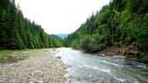 karpaten : The fast and noisy Tereblya river in Carpathian mountains is lined with woodlands, its perfect place to walk along the bank and enjoy the nature of Ukraine.