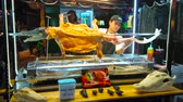 krokodyl : BANGKOK, THAILAND - APRIL 23, 2019: The stall of Khao San night market attracts people with crocodile barbecue, one of the most unusual local dishes, on April 23 in Bangkok Wideo