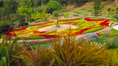 çim : CHIANG RAI, THAILAND - MAY 9, 2019: Enjoy the scenic flower beds of Mae Fah Luang through the colorful bromeliad garden with many different species, Doi Tung, on May 9 in Chiang Rai Stok Video