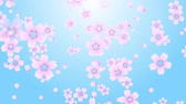 Falling while rotating cherry blossom and petals on blue background.