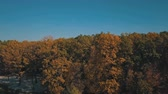 no people : Yellow forest. Golden autumn. Aerial view
