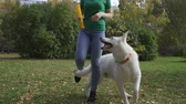 collie : The dog plays with the owner, performs the trick. White Swiss Shepherd dog runs between the owners legs behind a rubber rod.