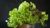 vegetarianismo : Slow motion view on lettuce sprayed with water on a dark background closeup