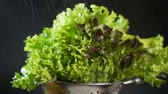 yıkama : Slow motion view on lettuce sprayed with water on a dark background closeup
